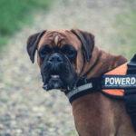 Sporty, które możesz uprawiać z psem