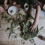 Jakie zioła stosować na przeziębienie?
